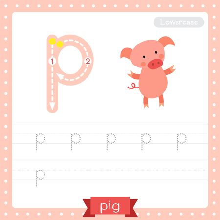 Letter P lowercase cute children colorful zoo and animals ABC alphabet tracing practice worksheet of Standing Pig for kids learning English vocabulary and handwriting vector illustration.