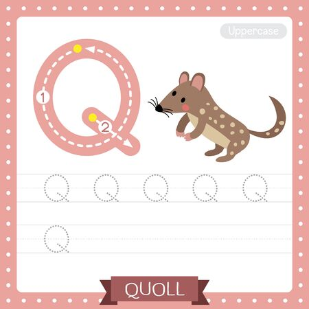 Letter Q uppercase cute children colorful zoo and animals ABC alphabet tracing practice worksheet of Standing Quoll for kids learning English vocabulary and handwriting vector illustration.