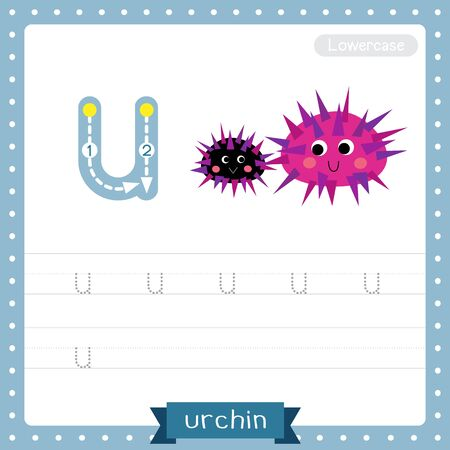 Letter U lowercase cute children colorful zoo and animals ABC alphabet tracing practice worksheet of Urchin for kids learning English vocabulary and handwriting vector illustration. Illustration