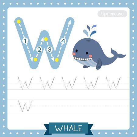 Lettre W majuscule enfants colorés zoo et animaux ABC alphabet traçage feuille de travail de Blue Whale pour les enfants qui apprennent le vocabulaire anglais et l'illustration vectorielle de l'écriture manuscrite.