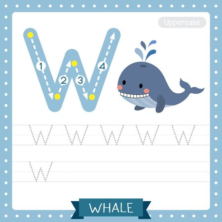 Letter W uppercase cute children colorful zoo and animals ABC alphabet tracing practice worksheet of Blue Whale for kids learning English vocabulary and handwriting vector illustration. Illustration