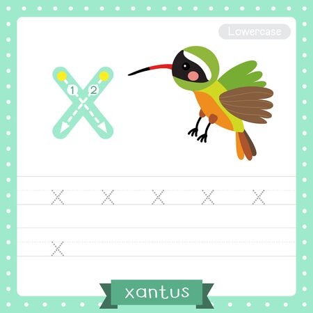 Letter X lowercase cute children colorful zoo and animals ABC alphabet tracing practice worksheet of Flying Xantus Hummingbird for kids learning English vocabulary and handwriting vector illustration. Foto de archivo - 129948656