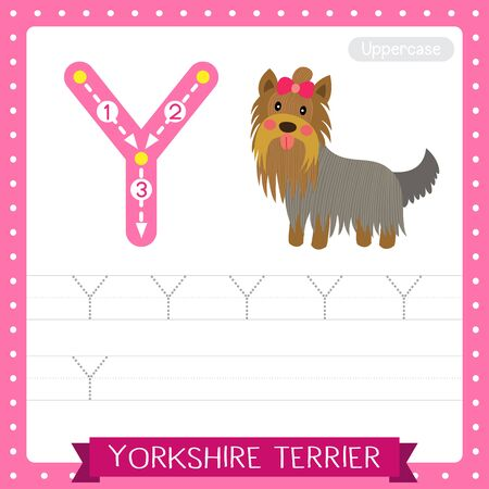 Letter Y uppercase cute children colorful zoo and animals ABC alphabet tracing practice worksheet of Yorkshire Terrier dog for kids learning English vocabulary and handwriting vector illustration. Foto de archivo - 129948670