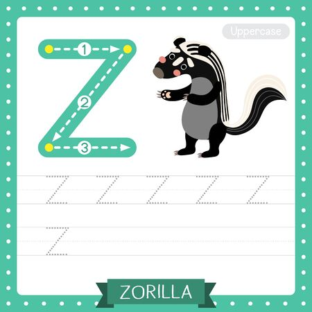 Letter Z uppercase cute children colorful zoo and animals ABC alphabet tracing practice worksheet of Zorilla for kids learning English vocabulary and handwriting vector illustration.