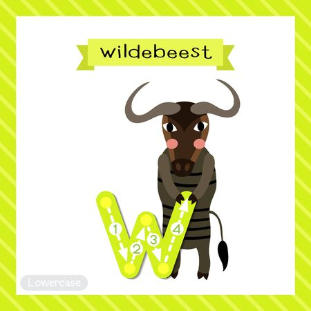 Letter W lowercase cute children colorful zoo and animals ABC alphabet tracing flashcard of Wildebeest standing on two legs for kids learning English vocabulary and handwriting vector illustration.
