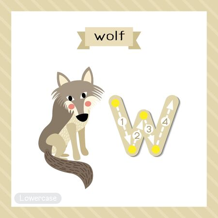 Letter W lowercase cute children colorful zoo and animals ABC alphabet tracing flashcard of Wolf for kids learning English vocabulary and handwriting vector illustration.