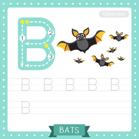 Letter B uppercase cute children colorful zoo and animals ABC alphabet tracing practice worksheet of Flying Bats with bow for kids learning English vocabulary and handwriting vector illustration.