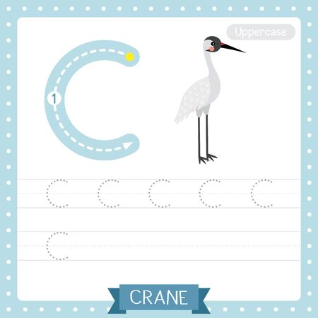 Letter C uppercase cute children colorful zoo and animals ABC alphabet tracing practice worksheet of Standing Crane bird for kids learning English vocabulary and handwriting vector illustration.