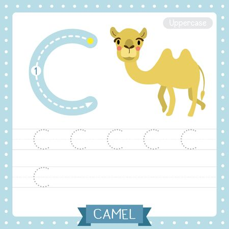 Letter C uppercase cute children colorful zoo and animals ABC alphabet tracing practice worksheet of Bactrian Camel for kids learning English vocabulary and handwriting vector illustration. Çizim