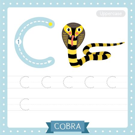 Letter C uppercase cute children colorful zoo and animals ABC alphabet tracing practice worksheet of Black and Yellow Cobra snake for kids learning English vocabulary and handwriting vector illustration.