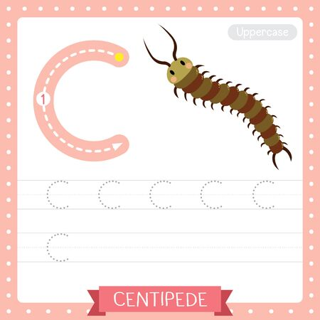 Letter C uppercase cute children colorful zoo and animals ABC alphabet tracing practice worksheet of Centipede for kids learning English vocabulary and handwriting vector illustration. Çizim