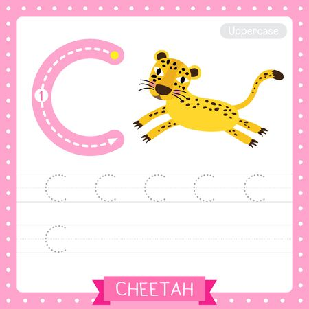 Letter C uppercase cute children colorful zoo and animals ABC alphabet tracing practice worksheet of Jumping Cheetah for kids learning English vocabulary and handwriting vector illustration. Çizim