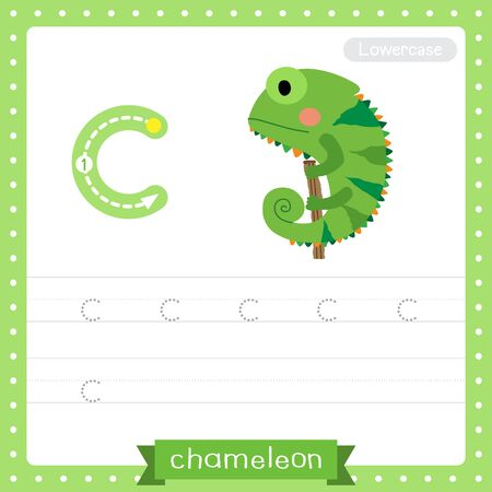 Letter C lowercase cute children colorful zoo and animals ABC alphabet tracing practice worksheet of Chameleon climbing on branch for kids learning English vocabulary and handwriting vector illustration.
