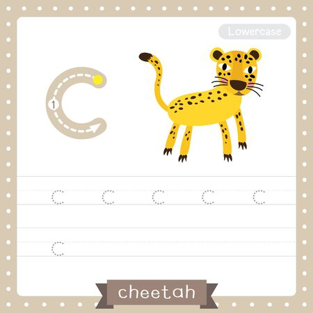 Letter C lowercase cute children colorful zoo and animals ABC alphabet tracing practice worksheet of Cheetah for kids learning English vocabulary and handwriting vector illustration.