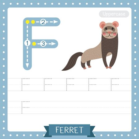 Letter F uppercase cute children colorful zoo and animals ABC alphabet tracing practice worksheet of Standing Ferret for kids learning English vocabulary and handwriting vector illustration.