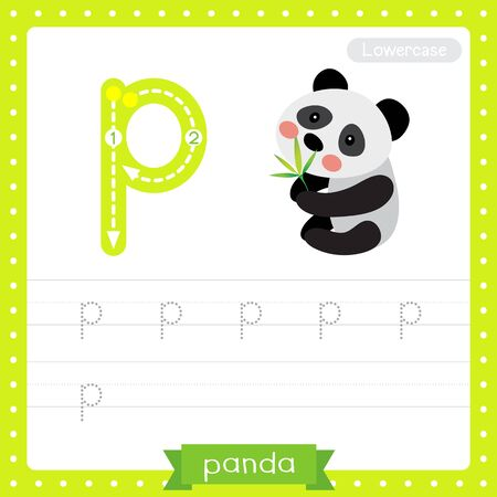 Letter P lowercase cute children colorful zoo and animals ABC alphabet tracing practice worksheet of Sitting Chinese Panda bear for kids learning English vocabulary and handwriting vector illustration.