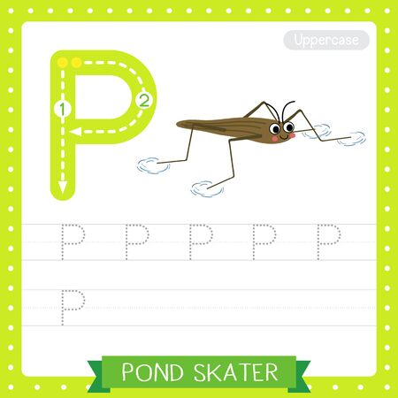 Letter P uppercase cute children colorful zoo and animals ABC alphabet tracing practice worksheet of Pond Skater for kids learning English vocabulary and handwriting vector illustration. Ilustração