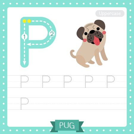 Letter P uppercase cute children colorful zoo and animals ABC alphabet tracing practice worksheet of Pug dog for kids learning English vocabulary and handwriting vector illustration.