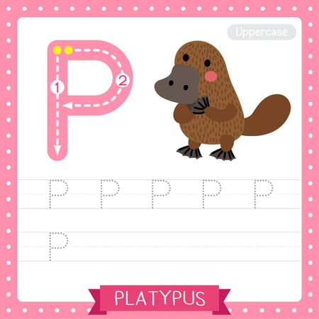 Letter P uppercase cute children colorful zoo and animals ABC alphabet tracing practice worksheet of Standing Platypus for kids learning English vocabulary and handwriting vector illustration. Ilustração