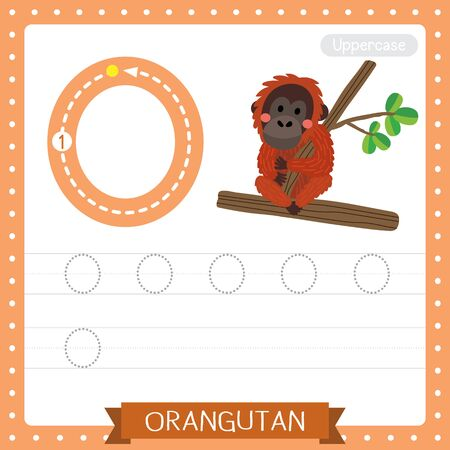 Letter O uppercase cute children colorful zoo and animals ABC alphabet tracing practice worksheet of Orangutan sitting on branch for kids learning English vocabulary and handwriting vector illustration. Ilustracje wektorowe