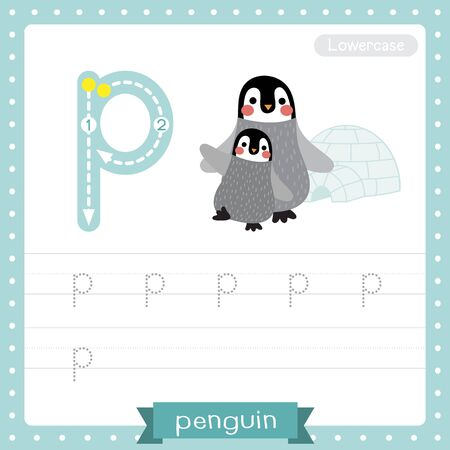Letter P lowercase cute children colorful zoo and animals ABC alphabet tracing practice worksheet of Penguin mother and child for kids learning English vocabulary and handwriting vector illustration.