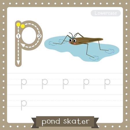 Letter P lowercase cute children colorful zoo and animals ABC alphabet tracing practice worksheet of Pond Skater for kids learning English vocabulary and handwriting vector illustration.