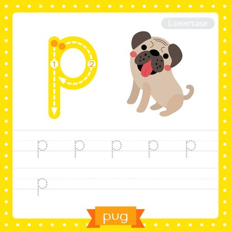 Letter P lowercase cute children colorful zoo and animals ABC alphabet tracing practice worksheet of Pug dog for kids learning English vocabulary and handwriting vector illustration.