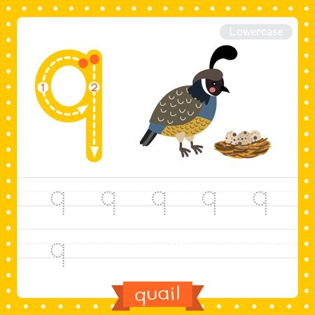 Letter Q lowercase cute children colorful zoo and animals ABC alphabet tracing practice worksheet of Quail bird with eggs for kids learning English vocabulary and handwriting vector illustration.