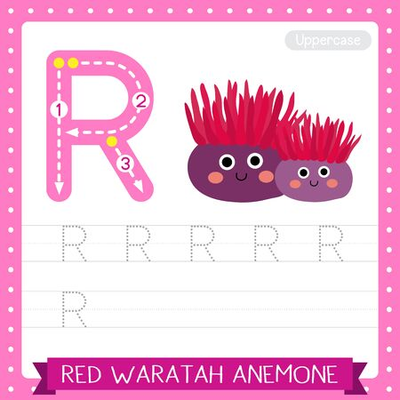 Letter R uppercase cute children colorful zoo and animals ABC alphabet tracing practice worksheet of Red Waratah Anemone for kids learning English vocabulary and handwriting vector illustration.