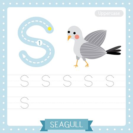 Letter S uppercase cute children colorful zoo and animals ABC alphabet tracing practice worksheet of Standing Seagull bird for kids learning English vocabulary and handwriting vector illustration.
