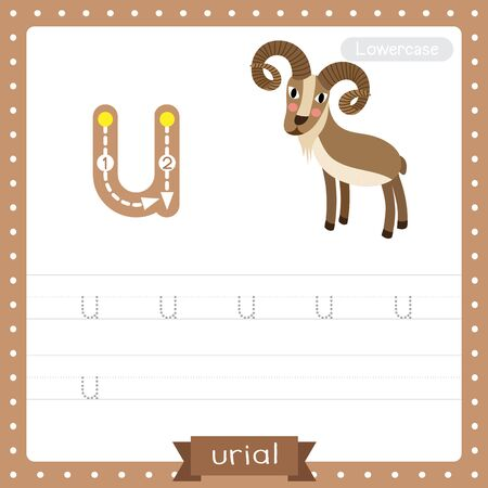 Letter U lowercase cute children colorful zoo and animals ABC alphabet tracing practice worksheet of Urial for kids learning English vocabulary and handwriting vector illustration. Çizim