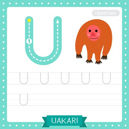 Letter U uppercase cute children colorful zoo and animals ABC alphabet tracing practice worksheet of Standing Uakari for kids learning English vocabulary and handwriting vector illustration.