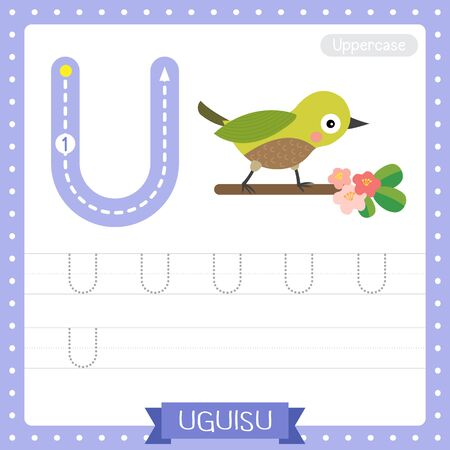 Letter U uppercase cute children colorful zoo and animals ABC alphabet tracing practice worksheet of Uguisu bird perching on branch for kids learning English vocabulary and handwriting vector illustration.