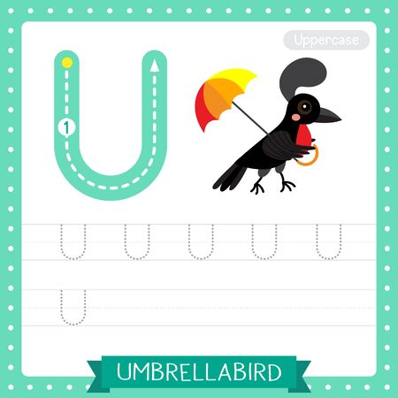 Letter U uppercase cute children colorful zoo and animals ABC alphabet tracing practice worksheet of Umbrellabird for kids learning English vocabulary and handwriting vector illustration.