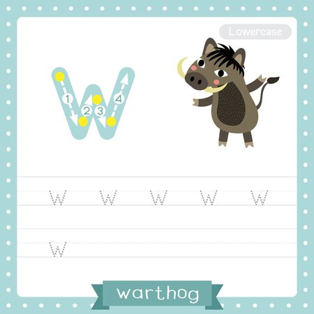 Letter W lowercase cute children colorful zoo and animals ABC alphabet tracing practice worksheet of Warthog for kids learning English vocabulary and handwriting vector illustration. Illustration