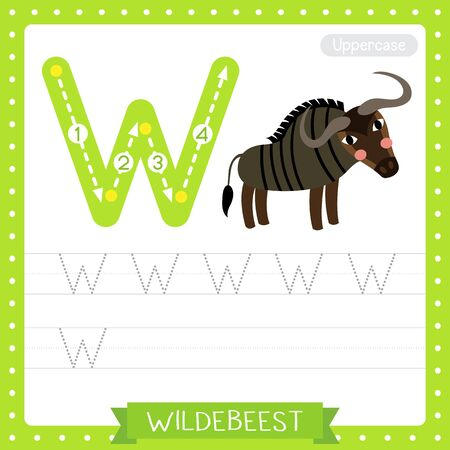 Letter W uppercase cute children colorful zoo and animals ABC alphabet tracing practice worksheet of Wildebeest for kids learning English vocabulary and handwriting vector illustration.