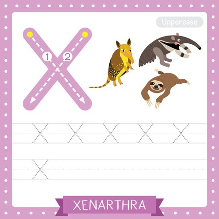 Letter X uppercase cute children colorful zoo and animals ABC alphabet tracing practice worksheet of Xenarthra for kids learning English vocabulary and handwriting vector illustration