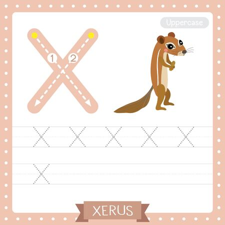 Letter X uppercase cute children colorful zoo and animals ABC alphabet tracing practice worksheet of Xerus for kids learning English vocabulary and handwriting vector illustration.