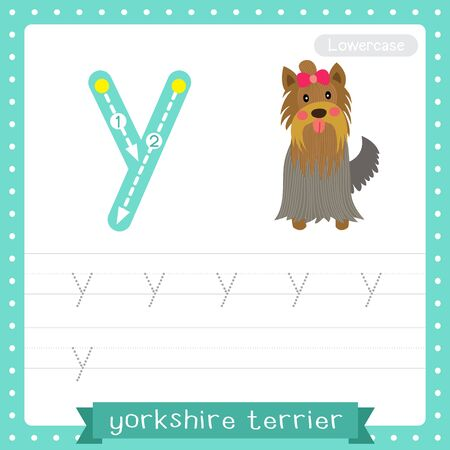 Letter Y lowercase cute children colorful zoo and animals ABC alphabet tracing practice worksheet of Yorkshire Terrier dog for kids learning English vocabulary and handwriting vector illustration.