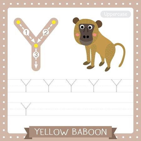 Letter Y uppercase cute children colorful zoo and animals ABC alphabet tracing practice worksheet of Yellow Baboon monkey for kids learning English vocabulary and handwriting vector illustration.