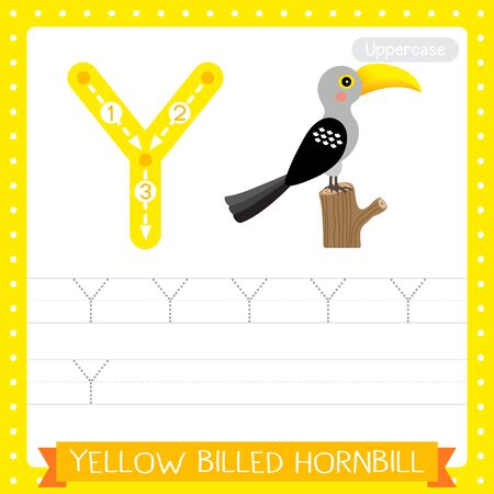 Letter Y uppercase cute children colorful zoo and animals ABC alphabet tracing practice worksheet of Yellow-Billed Hornbill bird for kids learning English vocabulary and handwriting vector illustration. Illusztráció
