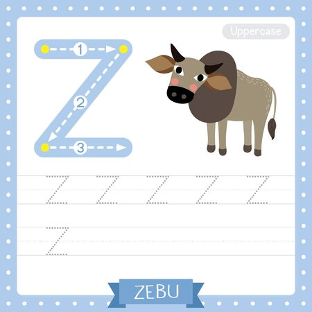Letter Z uppercase cute children colorful zoo and animals ABC alphabet tracing practice worksheet of Zebu for kids learning English vocabulary and handwriting vector illustration.