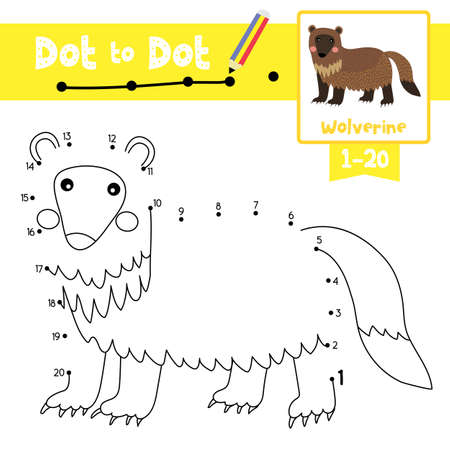 Dot to dot educational game and Coloring book of Wolverine animals cartoon character for preschool kids activity about learning counting number 1-20 and handwriting practice worksheet. Vector Illustration.