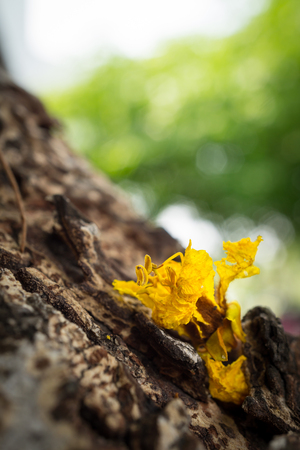 Yellow flowers  on tree trunk