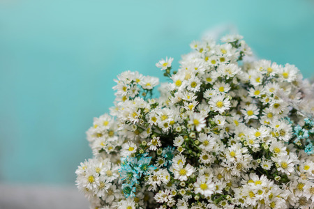 Bouquet of white daisy flowers wrapped in paper with cyan background