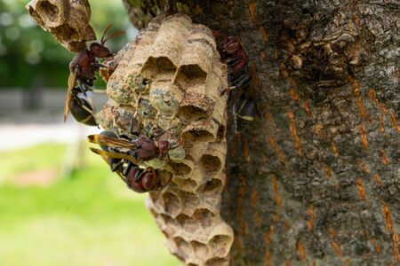 Wasp nest on the tree