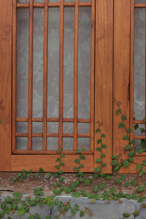 Climber green plant on wooden window, stock photo