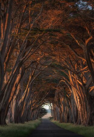 This is the picture of Cypress Tree Tunnel at Point Reyes in California, USA.