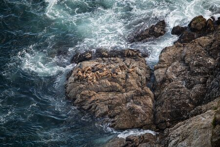This is the picture of Group of Sea Lions on Shores Banco de Imagens