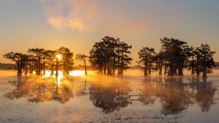 This is the picture of sunrise at Caddo Lake Texas, Louisiana, USA
